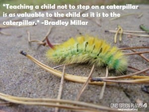 Caterpillar Quote OGP